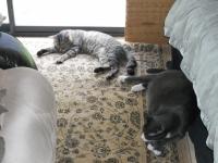 sleepycats